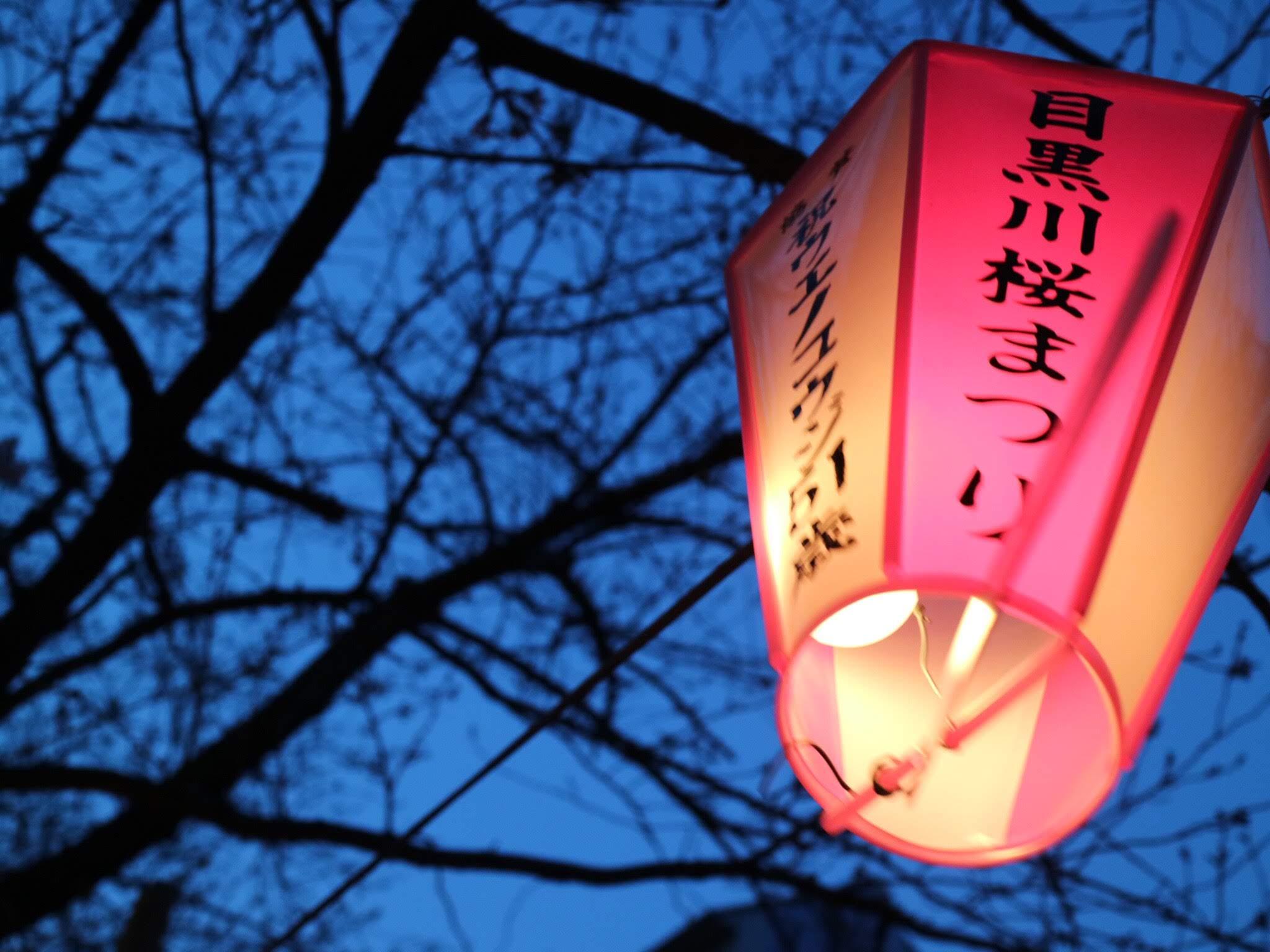 【報告】お花見ナイトウォーキング